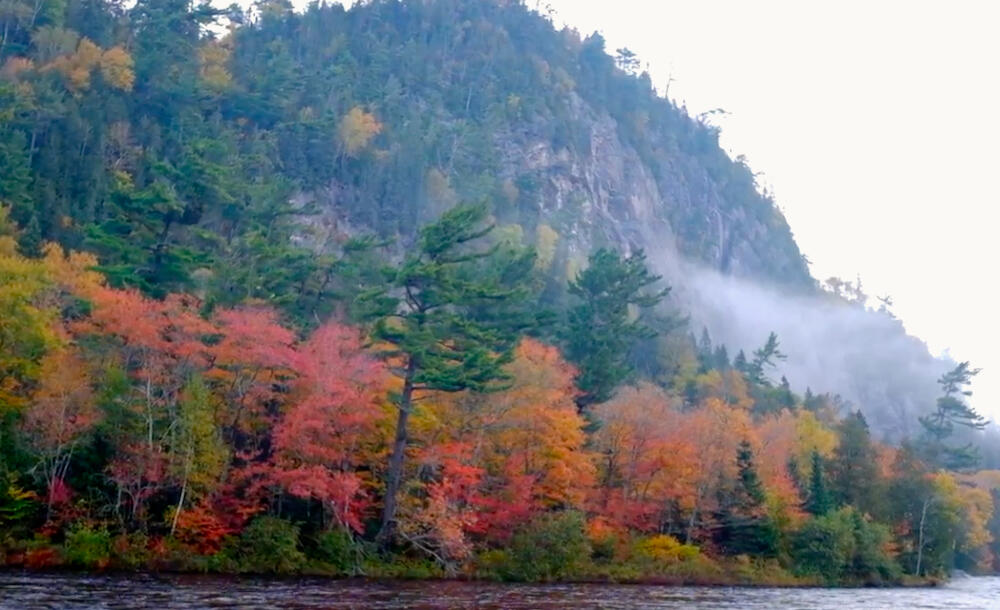 Vibrant colours of red and yellow leaves with grey rock cliff in background