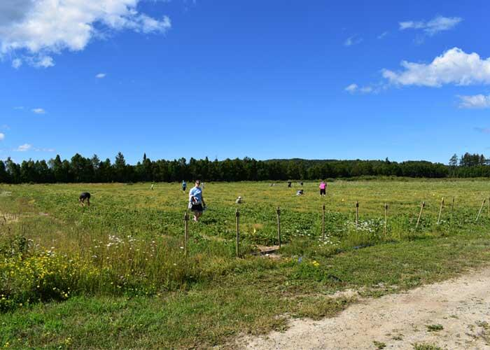 algoma highlands blueberry farm strawberry fields