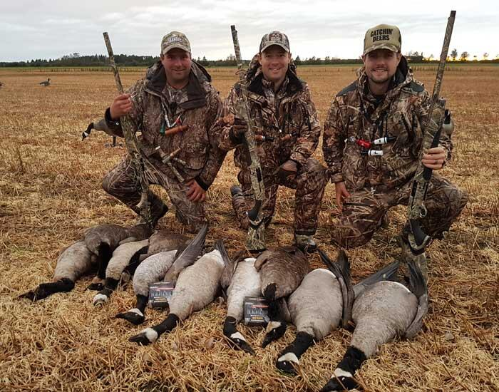 harvested canadian geese