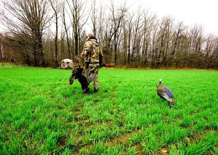 hunter with turkey and decoy