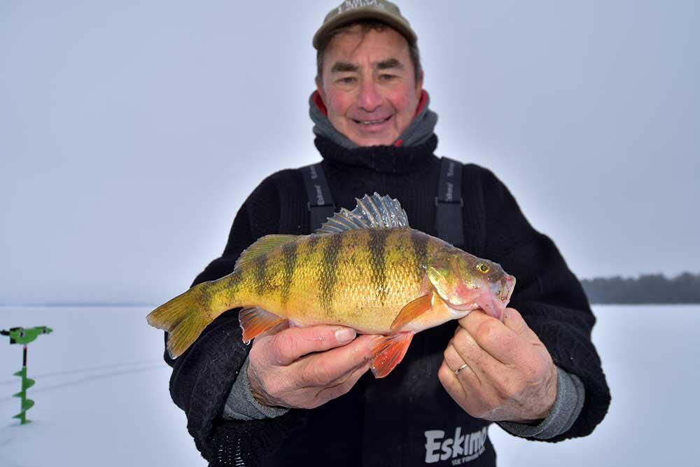 ice angler with yellow perch