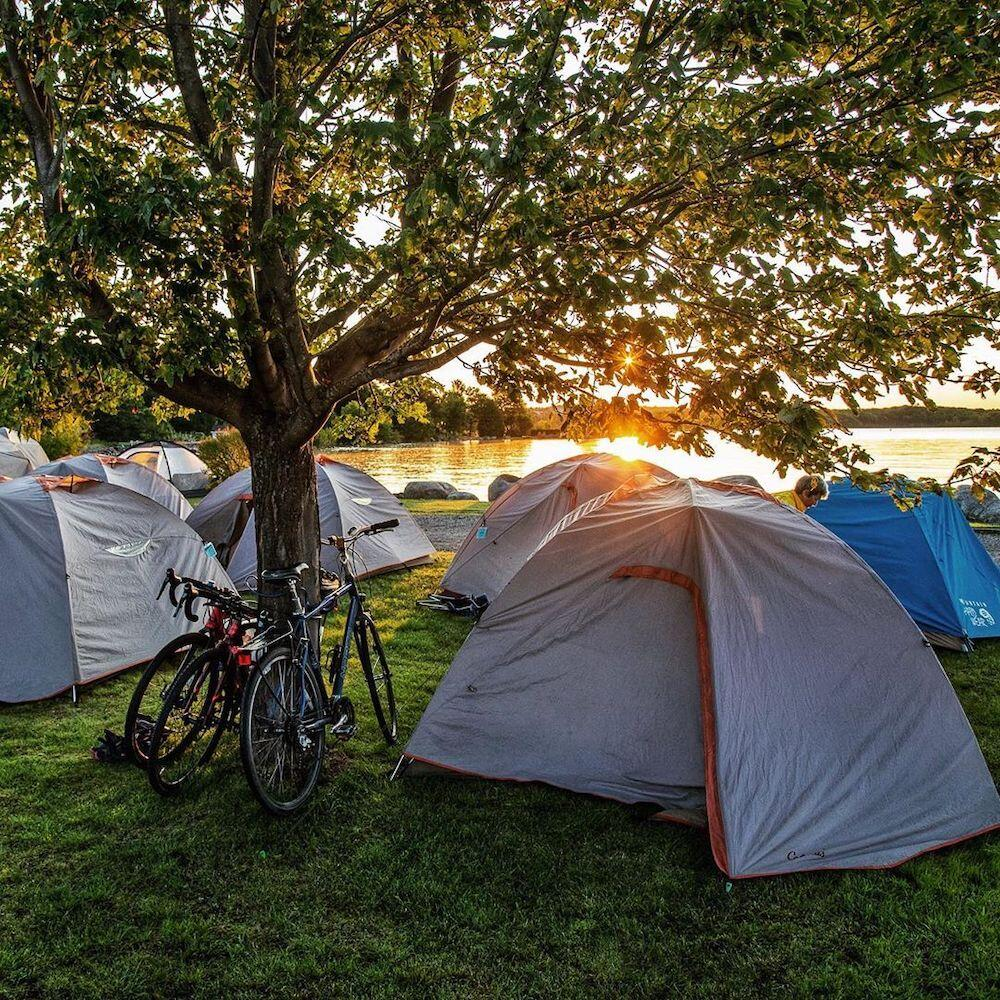 Bikes leaning up against tree surrounded by pitched tents