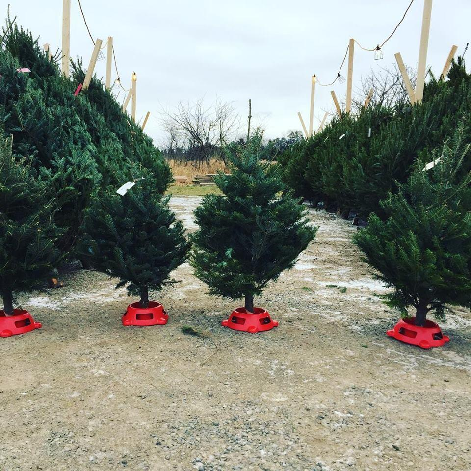 neal's country market christmas trees for sale