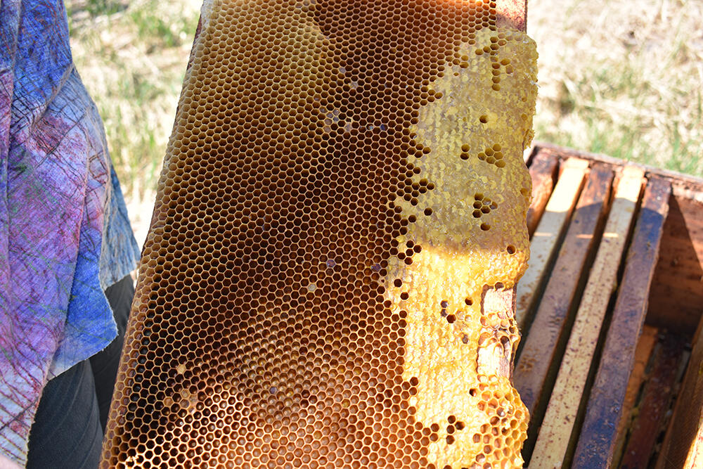 pearce-farms-bee-hives