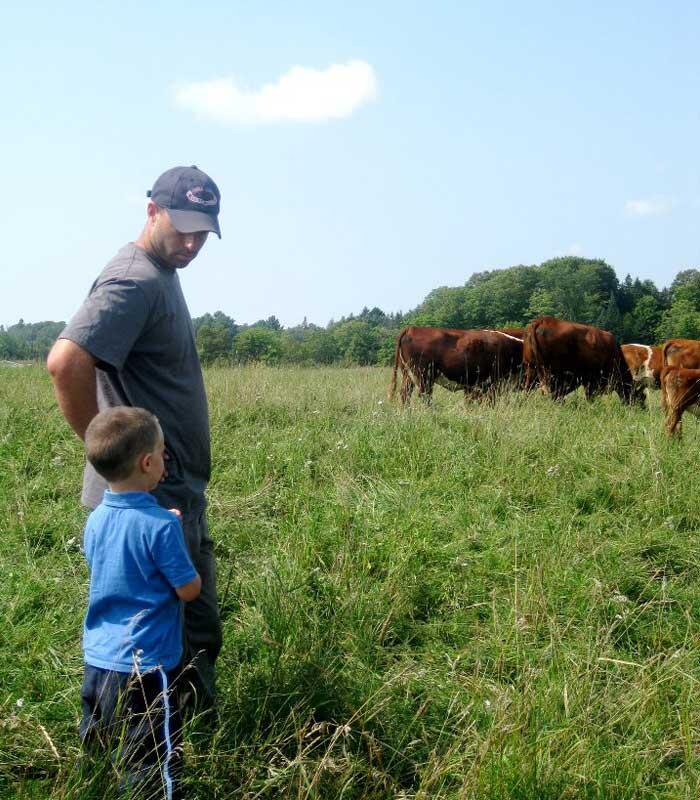 man and child looking at beef cattle