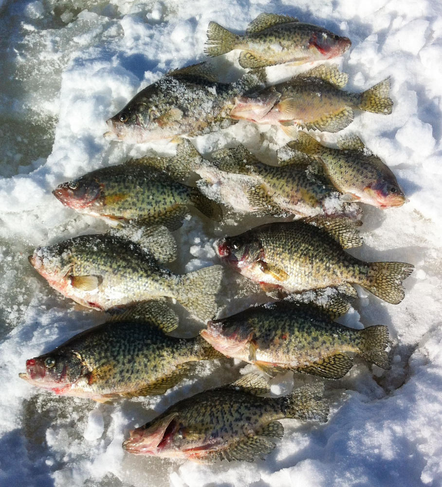 Ice fishing for crappie and bluegill northern ontario travel for Ice fishing bluegill