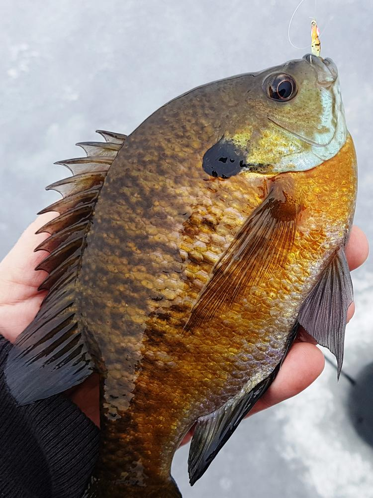 crappie-fishing-close-up
