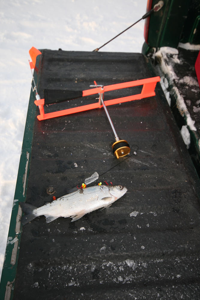 How to Ice Fish with Tip-Ups   Northern Ontario Travel