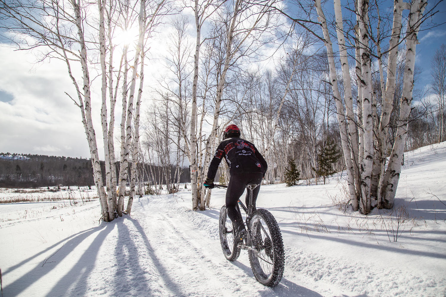 Man on fat bike cycling on snow covered trail surrounded by white birch trees.