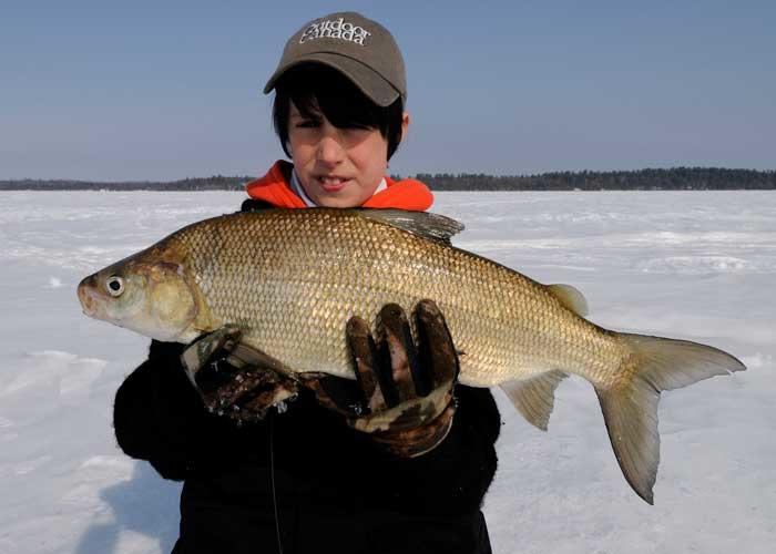 young ice angler holding whitefish