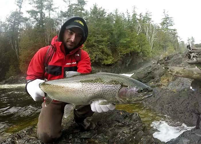 kevin king steelhead fishing algoma stream