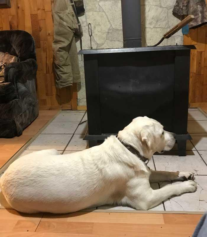 dog sitting in front of wood stove