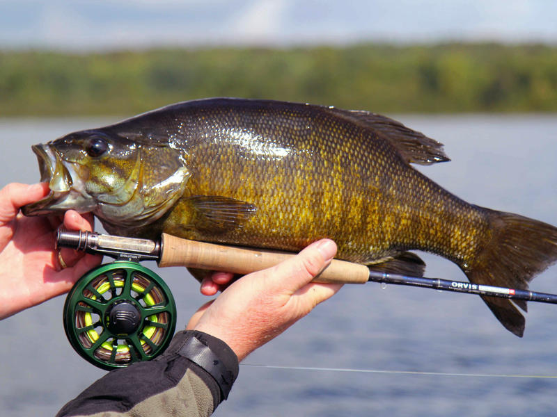 Colin mckeown northern ontario travel for Fly fishing for smallmouth bass