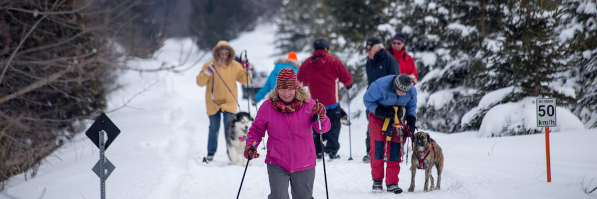 Families cross-country skiing on trails.